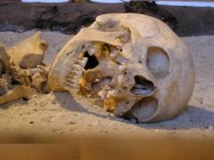 اكتشاف/découverte dans اكتشاف/découverte img_skelet1